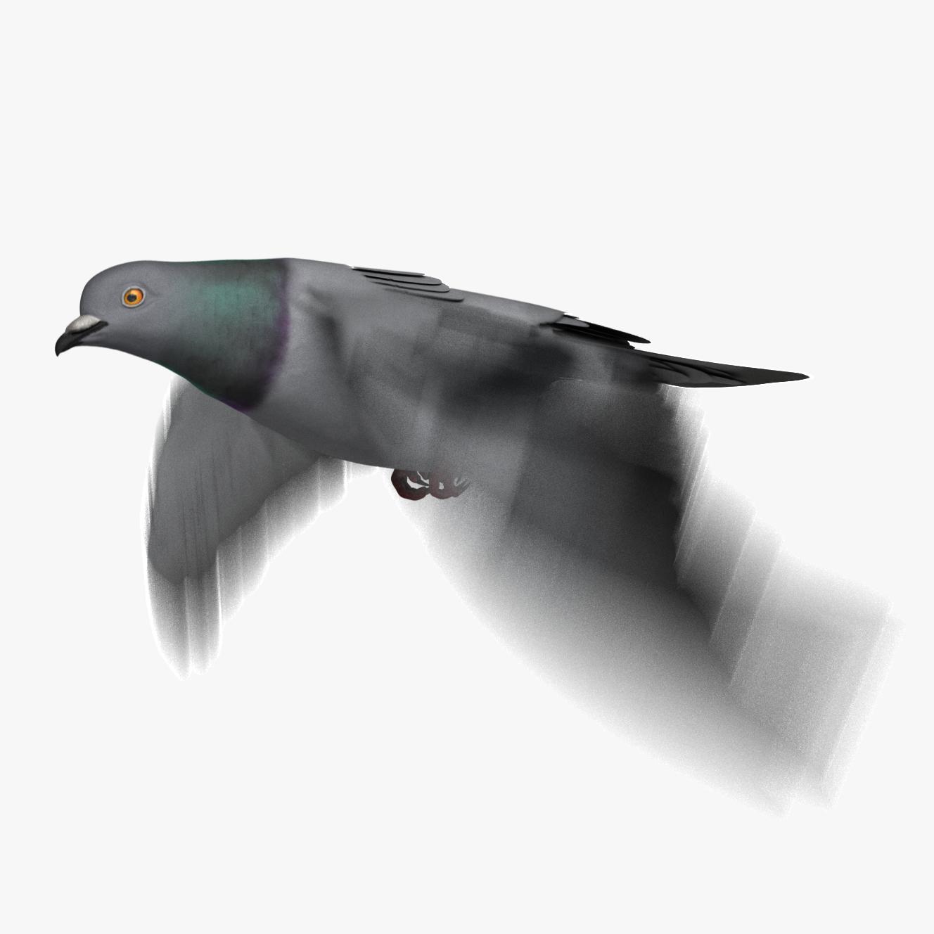 rock pigeon dove animation 3D