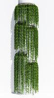 box ivy model