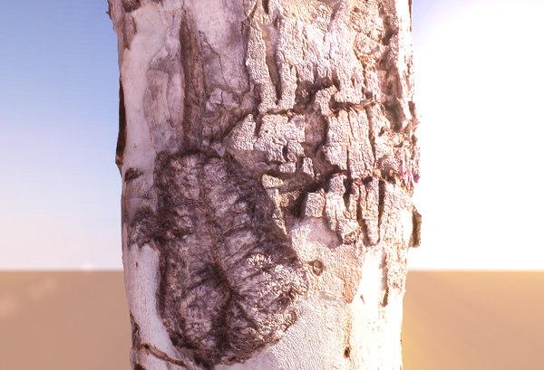 tree 3D