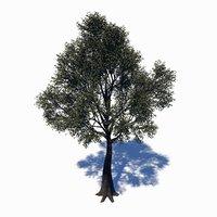 ceiba deciduous tree 3D model
