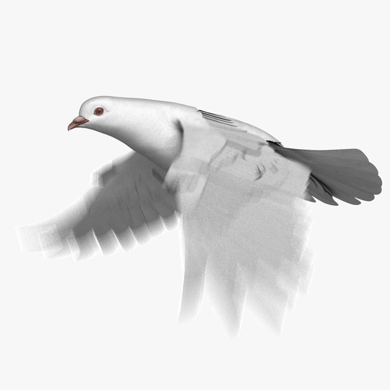 white dove animation 3D