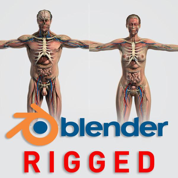 3D blender rigged male female anatomy