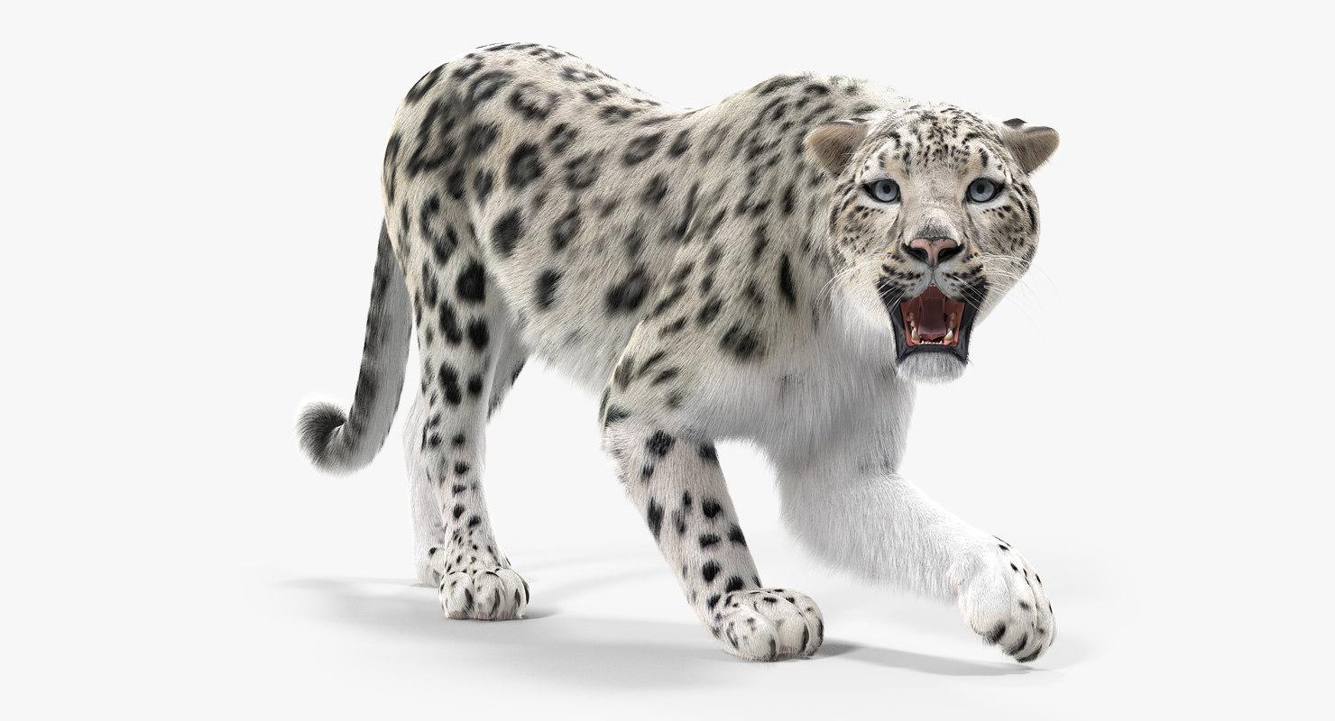3D snow leopard fur rigged