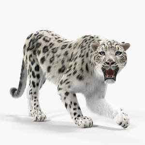 3D snow leopard fur rigged