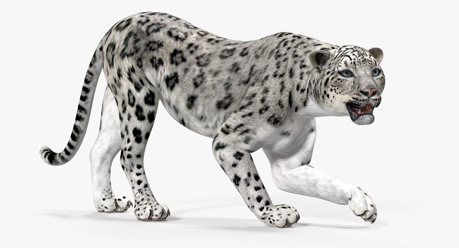 snow leopard rigged 3D model