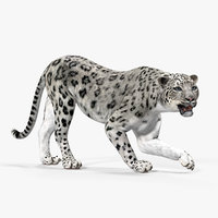 snow leopard rigged 3D model