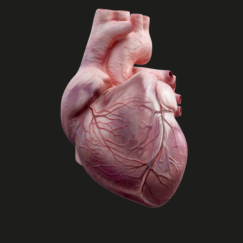 human heart animation 3D model