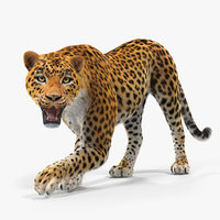 leopard rigged fur 3D model