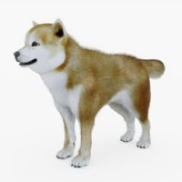 dog shiba model