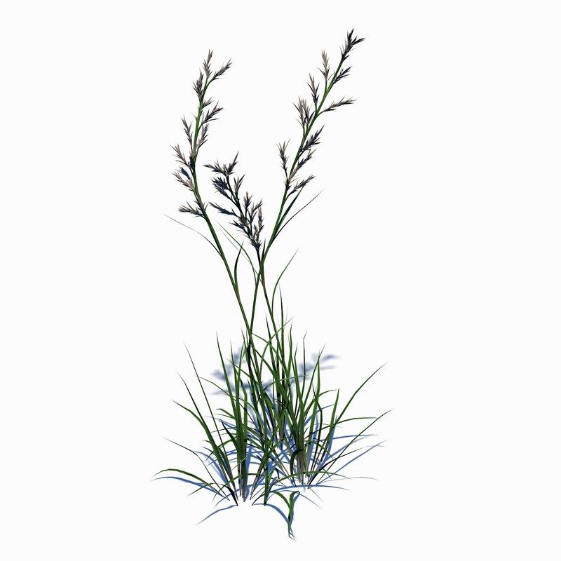 wild grass 3D model