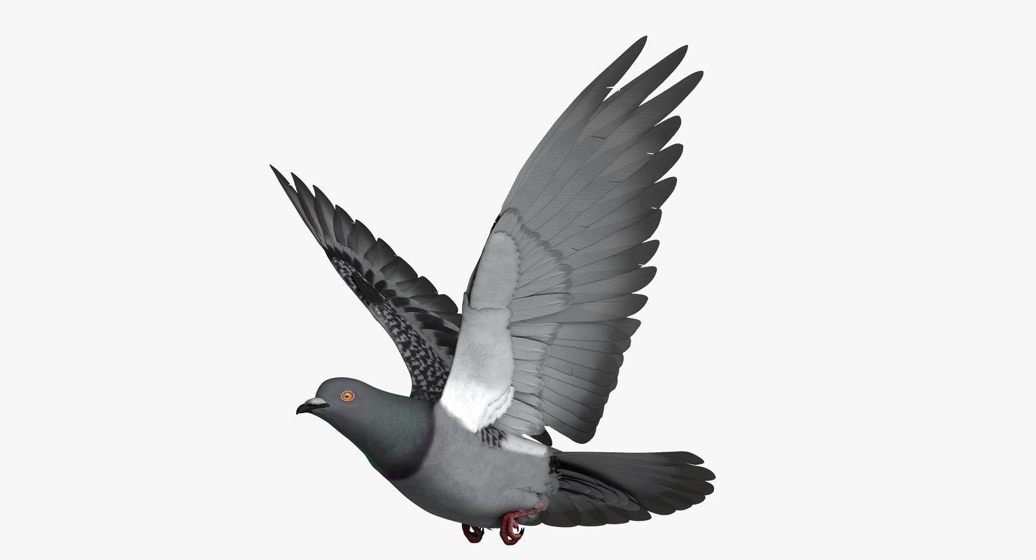 3D rigged dark rock pigeon