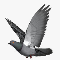 3D rigged dark rock pigeon
