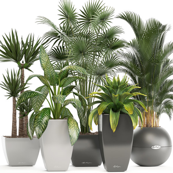 plants pots model