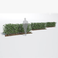 fagus sylvatica hedge small 3D model