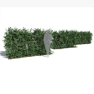 fagus sylvatica hedge 3D model
