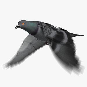 3D model dark rock pigeon dove
