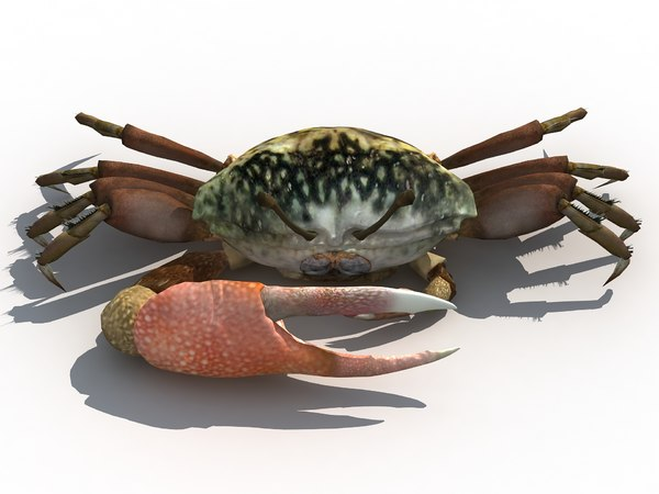 crab fiddler lake 3D model
