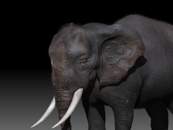 3D elephant rig