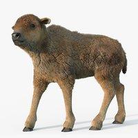 bison calf fur rig 3D model