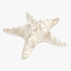realistic white starfish 3D model