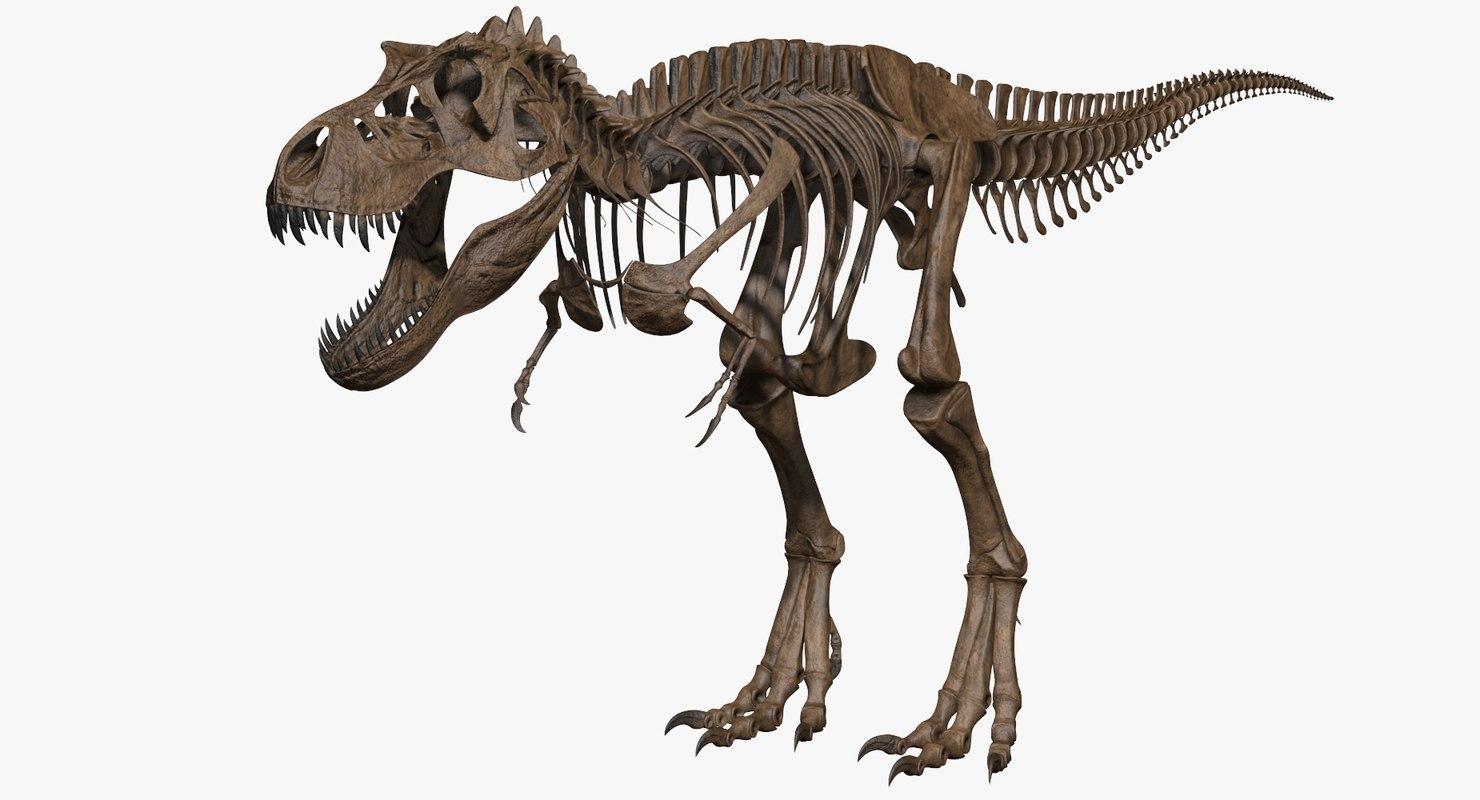 3D model tyrannosaurus rex skeleton skull