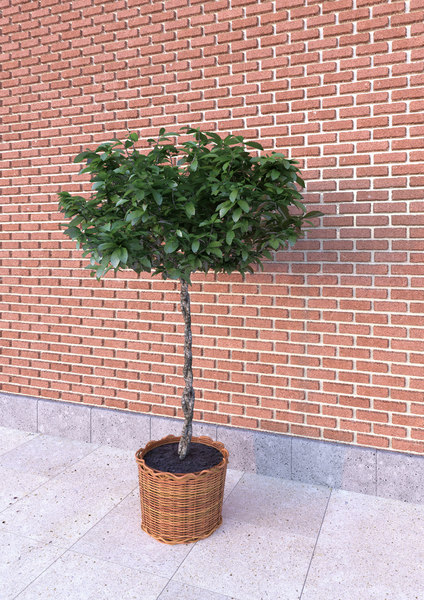 3D plant ratan pot