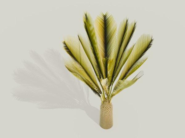 palm canary island 3D model