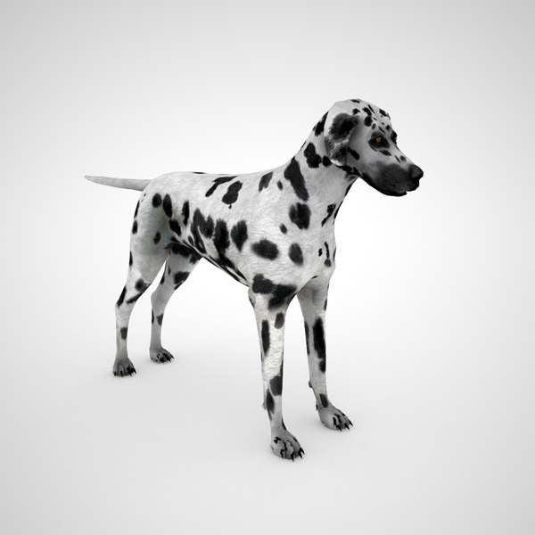 dalmatian dog 3D