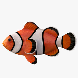 clown fish 3D model