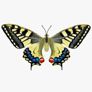 papilio machaon butterfly 3D model