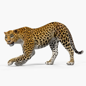 leopard rigged 3D model