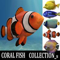 coral fish s 3D model