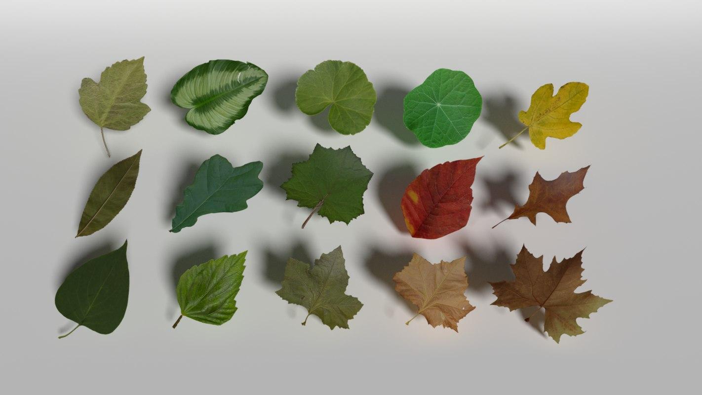 3D pack leaf plant