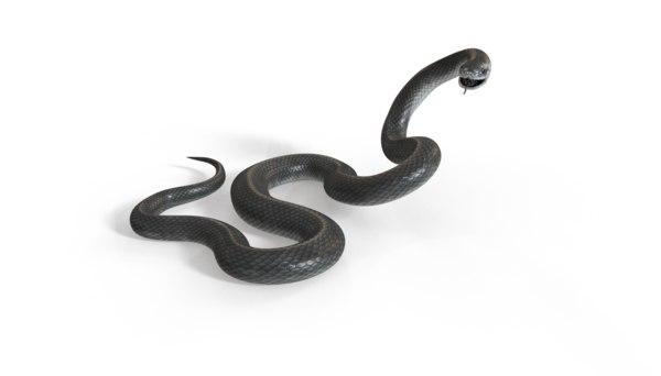 3D black mamba rig model