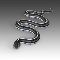Black White Snake Rigged