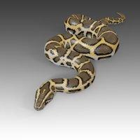Burmese Python Rigged