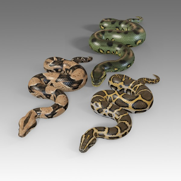 3D reptiles pythons