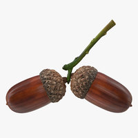 Two Acorns on Branch 3D Model