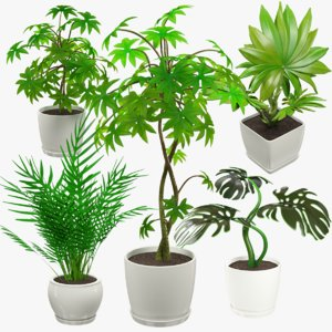 3D model indoor plants