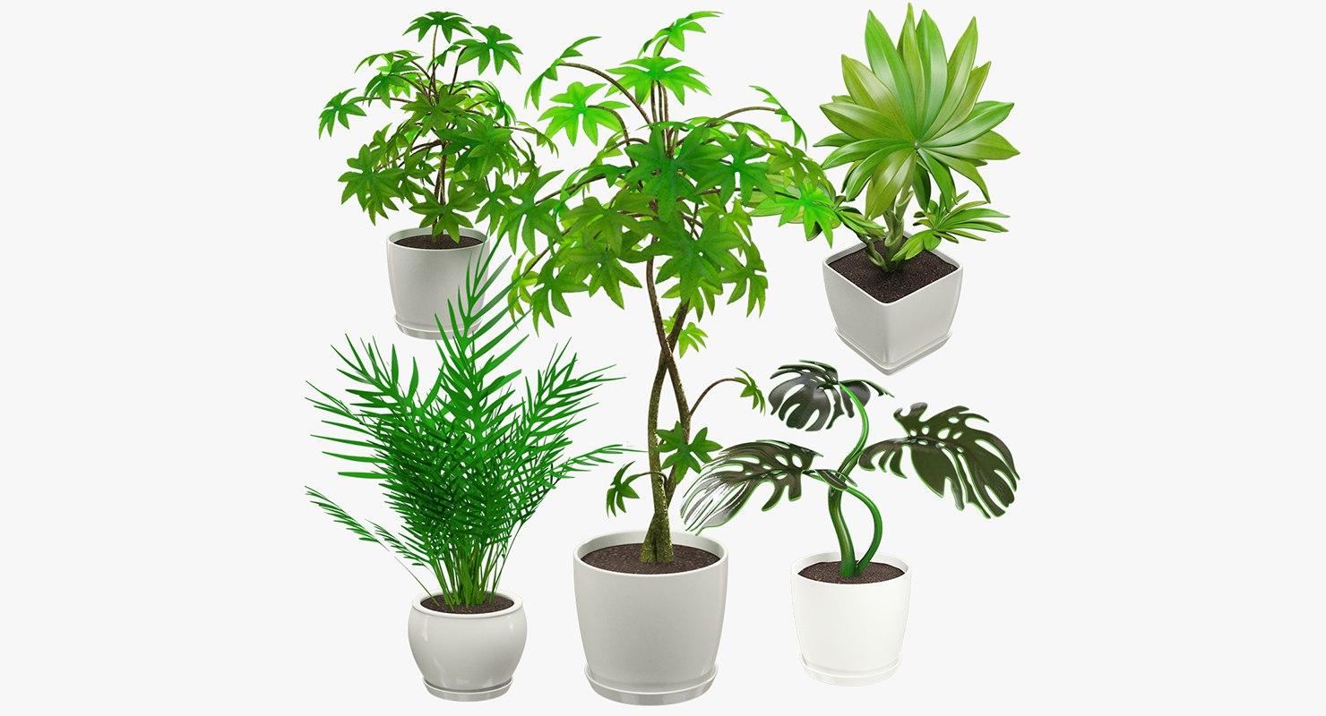 3D model indoor plants