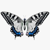 Butterfly With
