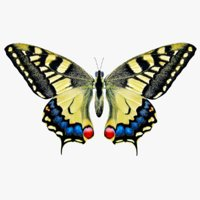 3D model papilio machaon butterfly