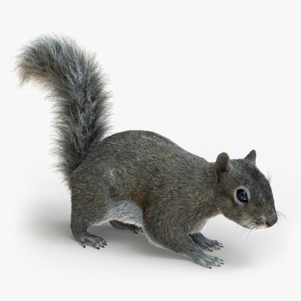 3D squirrel rigged fur 2