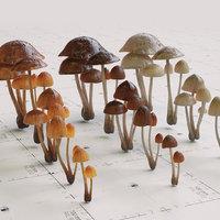 3D mushroom psilocybe 3 types