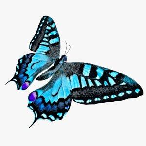 3D butterfly blue