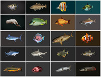 3D model fish - ready pack 1
