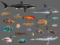 Low poly Fish Collection Animated - Game Ready Pack 2