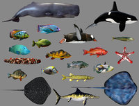 fish - ready pack 3 3D
