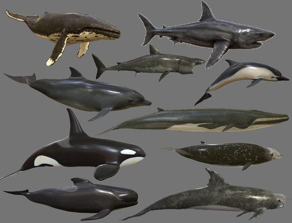 big fish - 3D model