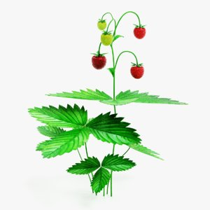 3D wild strawberry plant model